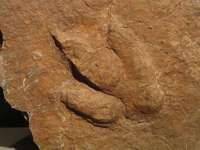 huellas de dinosaurio enciso
