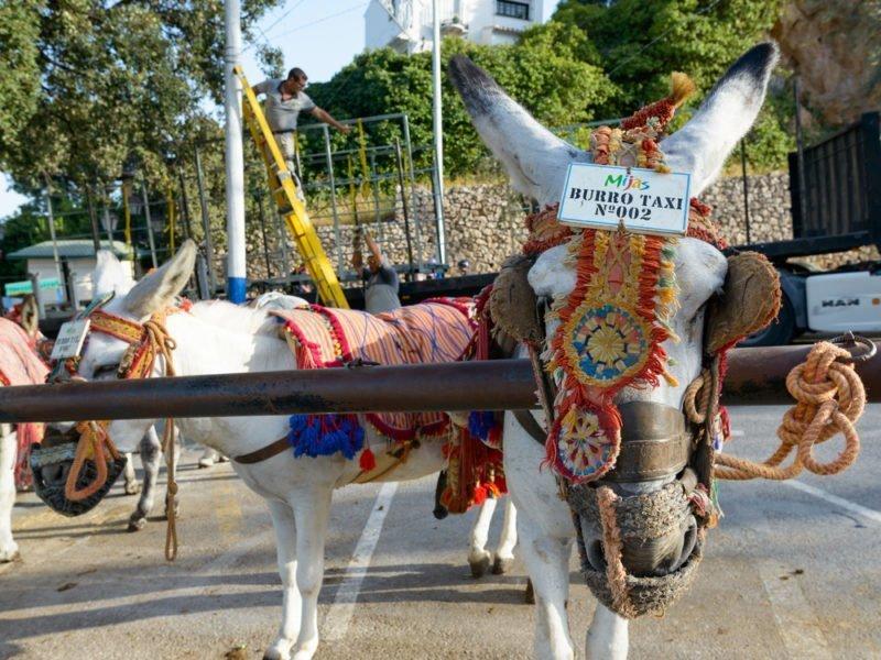 Mijas y sus burro-taxis (Málaga)