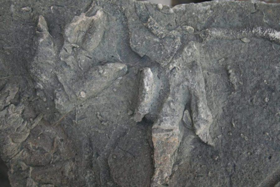 huellas dinosaurios en asturias