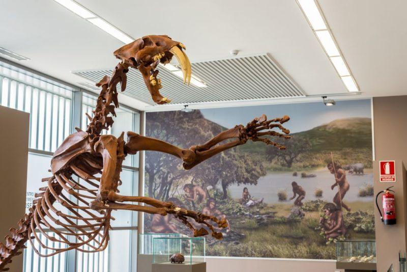 Orce: los seres humanos hace un millón de años