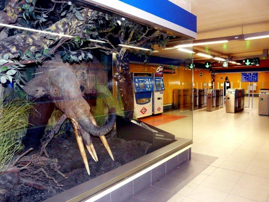 metro madrid carpetana restos fosiles e1528198499595