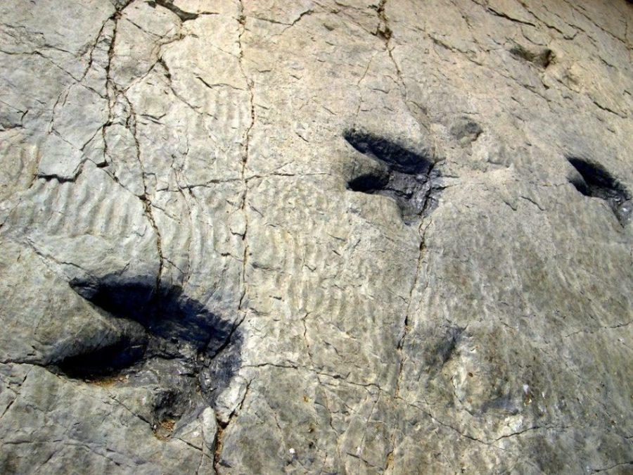 huellas dinosaurios cabecera - Fósiles y huellas de dinosaurios en la Reserva de la Biosfera riojana