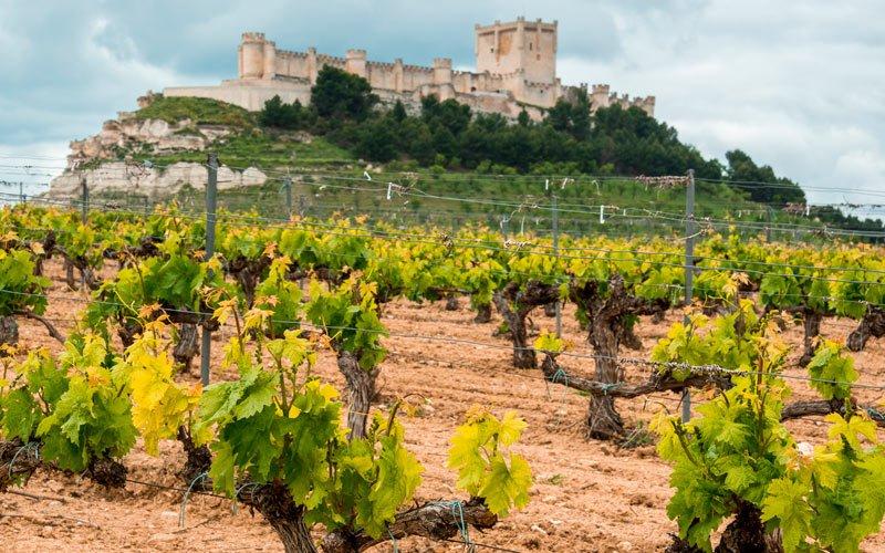 Peñafiel: buenos vinos en torno a su histórico castillo