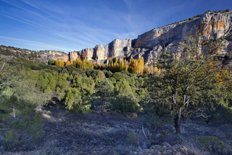 Montejo de la Vega: el recuerdo de Félix Rodríguez de la Fuente y el buitre leonado