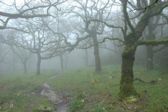 bosque niebla e1515020395332