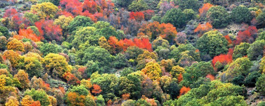 El bosque encantado de Sierra Nevada