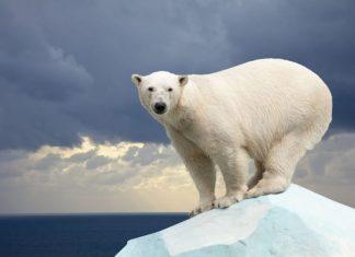 polar_oso